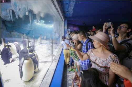 3月8日,王晰周深约你到珠海长隆支持海洋环保