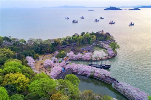 太湖鼋头渚迎来赏樱期,引周边春游高峰图片